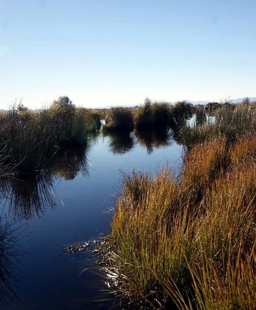 Titri Wetland